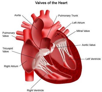 sakit jantung jantung koroner, jantung, gambar jantung, tentang jantung, jantung hati, artikel jantung, terapi jantung, kanker jantung, jantung adalah, komplikasi jantung, diet jantung, gejala jantung, penyebab jantung, serangan jantung, jenis jenis penyakit jantung, jantung lemah, definisi jantung, pengertian jantung, ciri ciri sakit jantung, jantung anak, penyakit jantung rematik, ciri sakit jantung, kateterisasi jantung, transplantasi jantung, ciri penyakit jantung, jantung bengkak, menghujam jantung, jantung berdetak, pembekakan jantung, persarafan jantung, auskultasi jantung, katerisasi jantung, vaskularisasi jantung, dekompensasi jantung, elektrofisiologi jantung, masalah jantung, ring jantung, foto jantung, herbal jantung, jantung aves, video jantung, ecg jantung, pacemaker jantung, jantung ppt, jantung normal, jantung kundalini, stent jantung, jantung membengkak, periksa jantung, penyakit jantung
