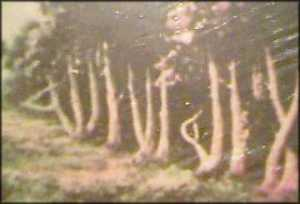treerow